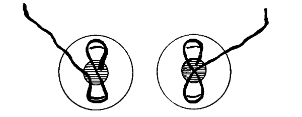 Round Web